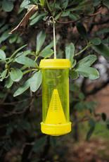 paper wasp trap
